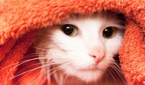 8 vấn đề răng miệng thường gặp ở Mèo
