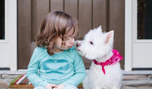 Một nụ hôn từ chú chó thân yêu có thể khiến bạn bị rụng răng?