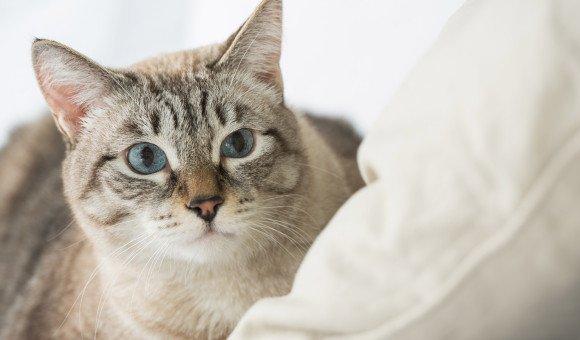 Cách chăm sóc răng miệng đơn giản cho nàng Mèo đỏng đảnh